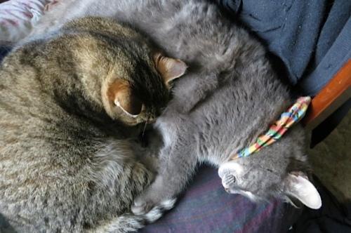 Mary and Smokey sleep in