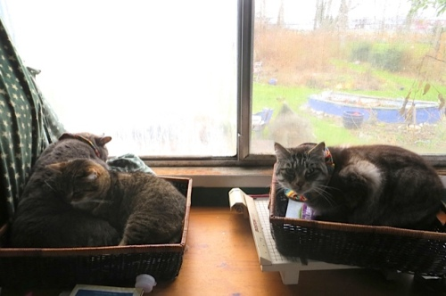 """cats in my """"paper sorting baskets"""".  Uh huh."""