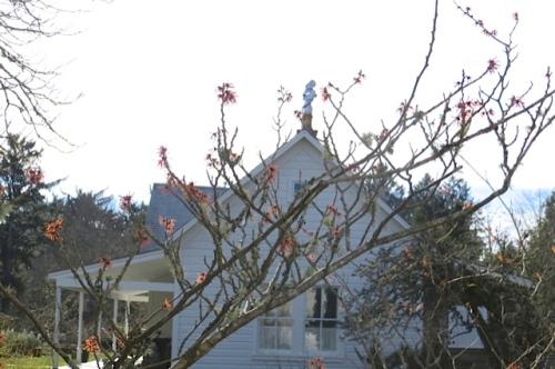 Hamamelis in bloom, probably 'Diane'