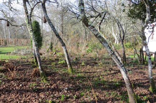 Huson garden