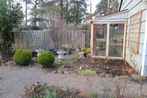I hope the Meliathus major returns next to the greenhouse...