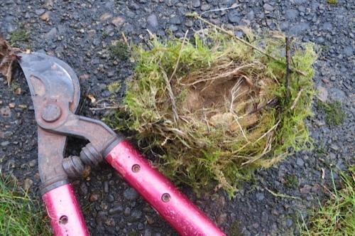 precious bird nest!