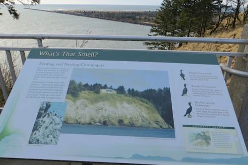 interpretive sign about cormorants