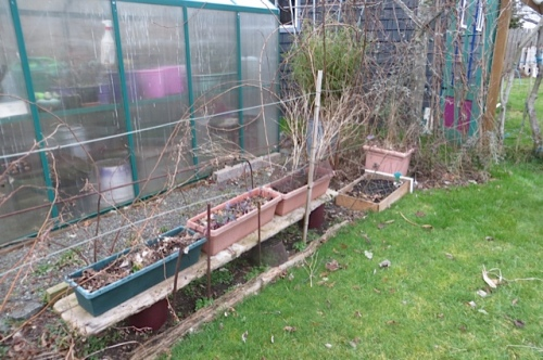 """and the raspberries need pruning...and these """"edible"""" containers removed...(was trying to be all veg-oriented for the edible garden tour!)"""