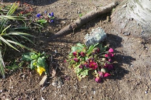Larry and Robert's garden