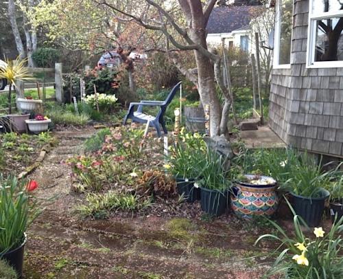 Ann's charming front garden