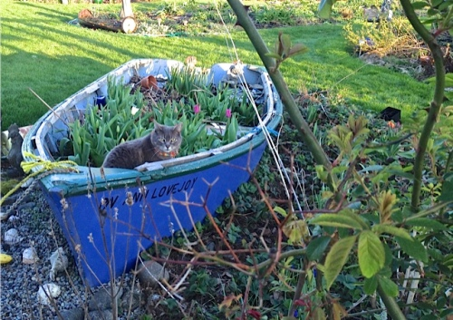 Smokey watched while captaining the garden boat.