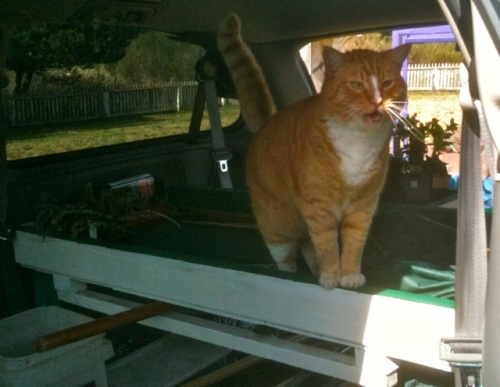 While I was gone, Allan got a photo of Felix in the van again.