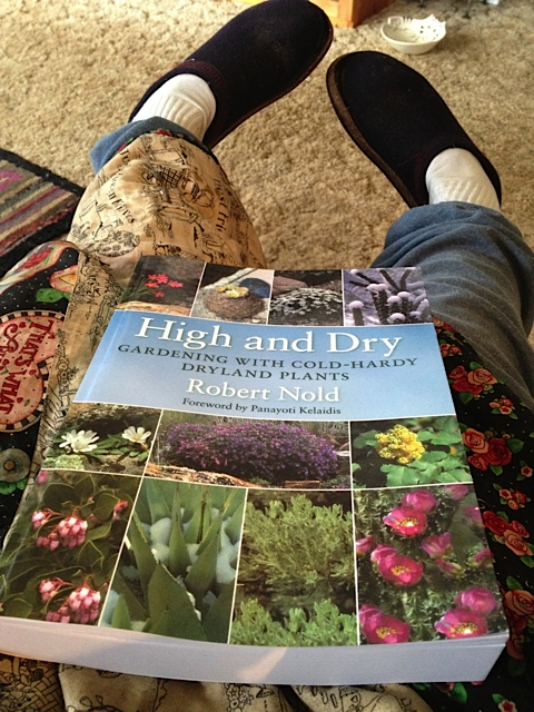 In my comfy chair, all ready to read High and Dry at last!