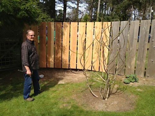 Denny's project: deer fence extension