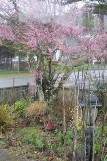 east window, wonderful rain, and 50 mph wind