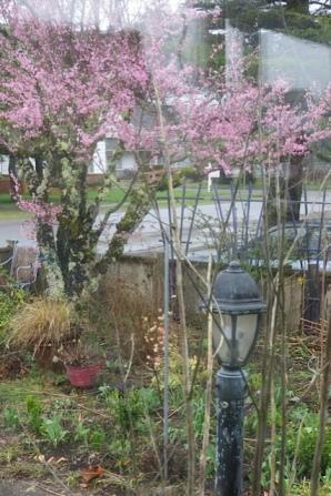 more lovely rain