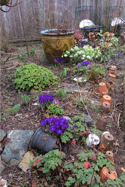 crocus and hellebores