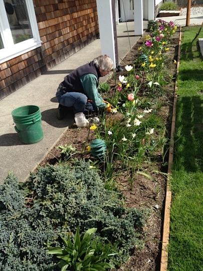 Allan planting