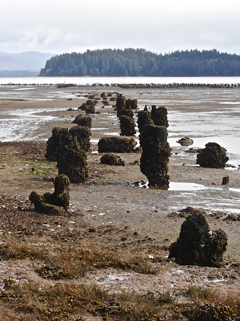 I believe these are the old railroad dock pilings.