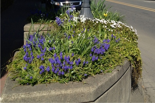 Out side Dennis Co:  We'll re-do this planter after bulb time; I'm sick of the vinca.