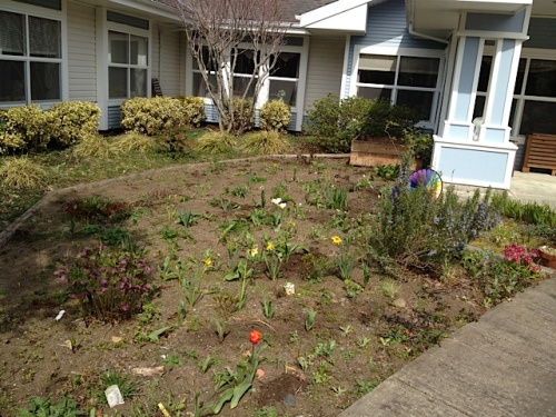 The northwest quadrant, a neglected one last year, looking wonderful with mulch.