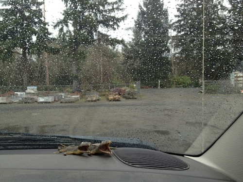 still raining at Peninsula Landscape Supply while our soil was being loaded into the trailer