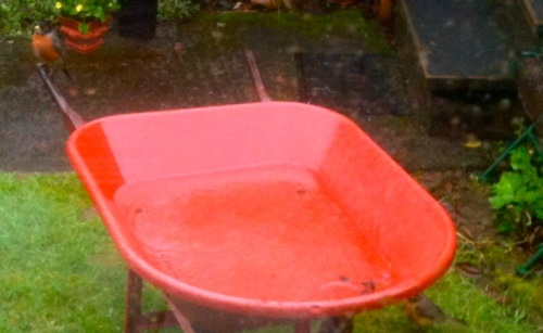 Allan took this photo, from his window, of a robin on the wheelbarrow.