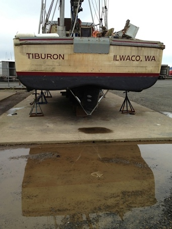 Tiburon in a puddle