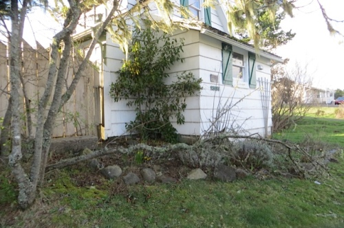 a tree down on the outer garden