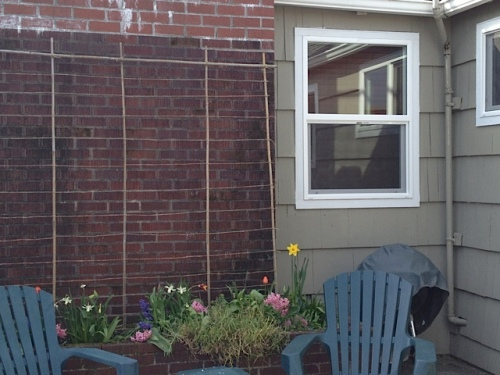 courtyard sweet pea trellis