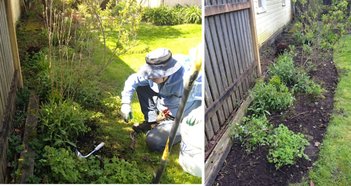 shady bed against neighbour's fence, before and after