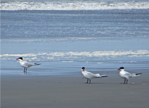 Sea birds may or may not agree with me.