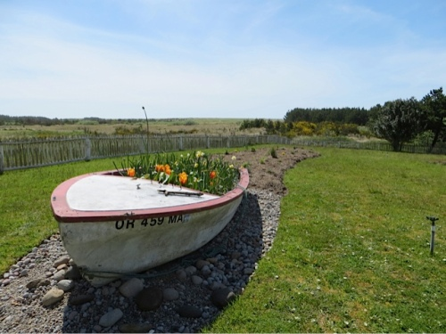 The boat narcissi required much deadheading.