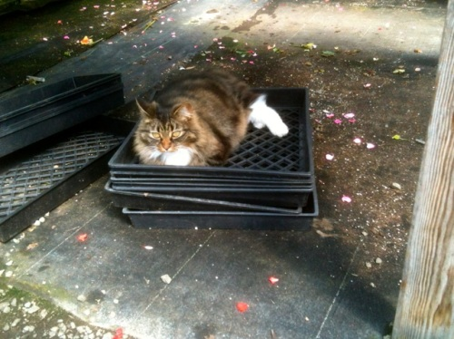 How much is that kitty in the plant tray?