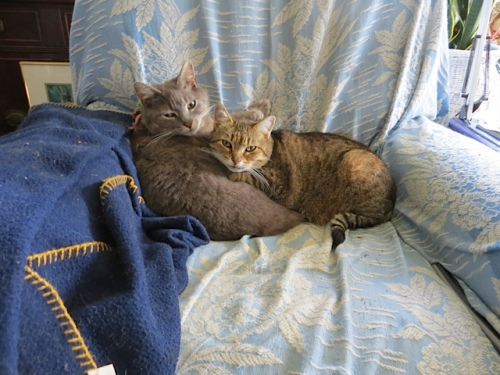 Smokey and Mary would love if I spent more time at home; they like to spend time with me whether I am reading or in the garden.