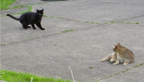 Onyx and Mary on Nora's driveway
