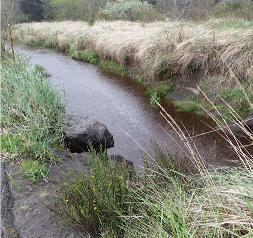rain pelting the creek