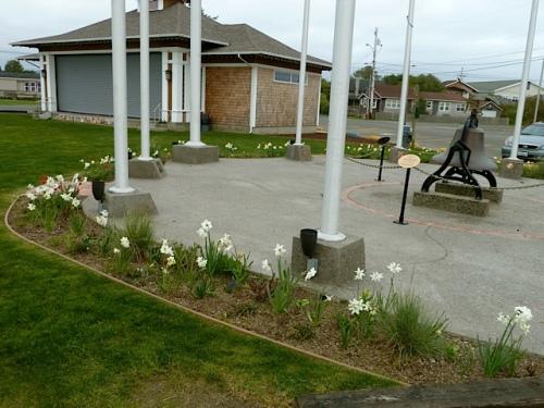 white narcissi in the Veterans Field Garden