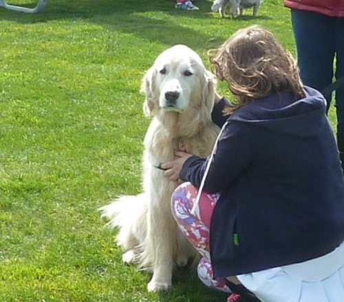 This beautiful dog had just returned from being a therapy dog for people in the Oso landslide.