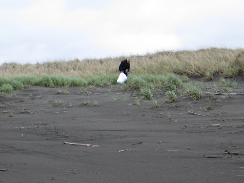Allan likes to look for trash right along the edge of the dunes.