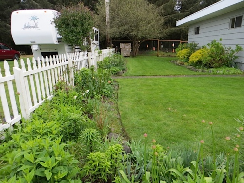 nicely edged now, although I did not have time to weed in the picket fence garden.