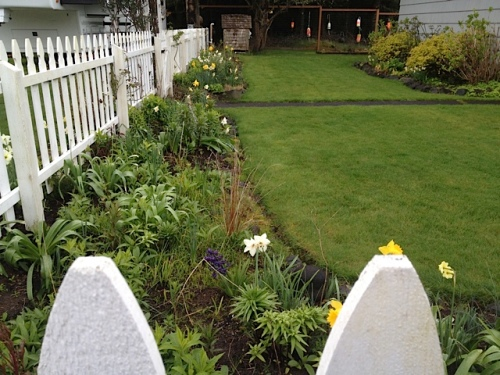 picket fence garden....no sweet peas up yet.