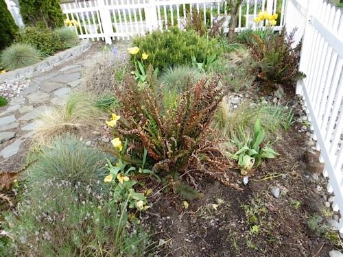 ferns before