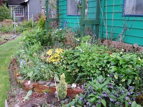 front garden just before hobbling indoors