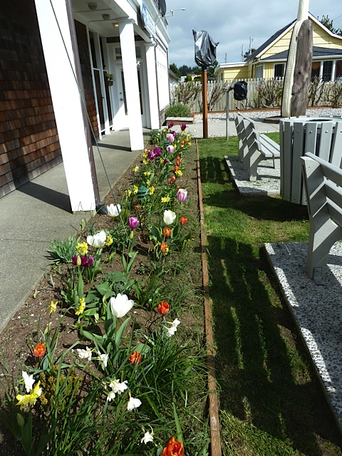 Fifth Street Park: a strip of spring bulbs