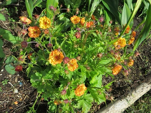 loving Geum 'Alabama Slammer' and the name amuses me.