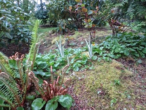a glade, with a kiwi vine