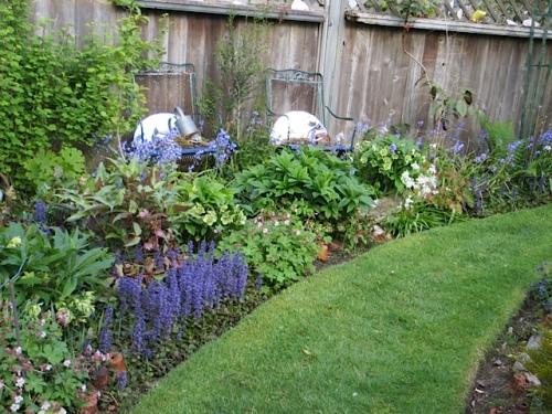 "hellebores in garden still blooming...want a ""hellebore walk"" through the garden but running out of room!"