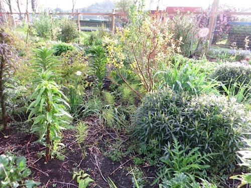 and lots of horsetail that I have lacked time or energy to pull...