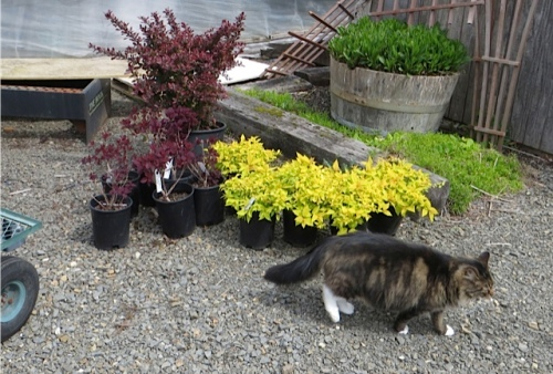 Last week my kitty friend knocked over and broke one of those garden boot planters.