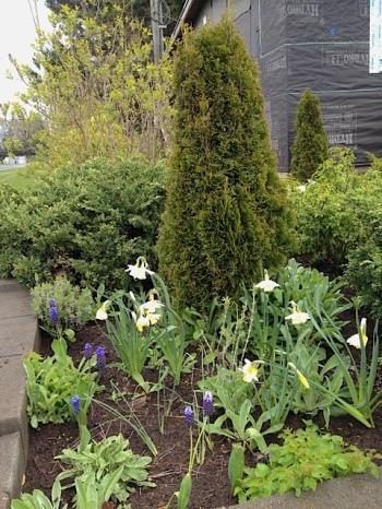 street corner of Mike's garden