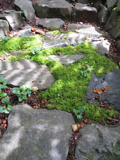 By the mouseplant, mossy steps lead up to the pond.