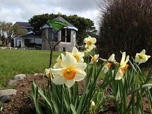 Boreas narcissi and the hot tub gazebo