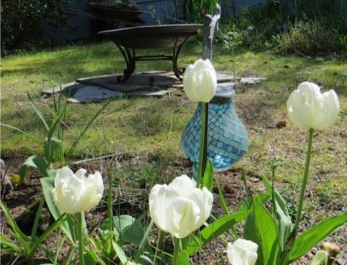 Tulip 'White Parrot'